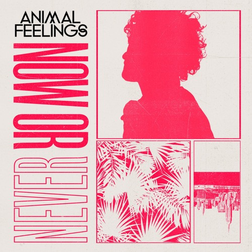 Animal Feelings - Now or Never (artwork faeton music)